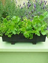 Stain a planter box
