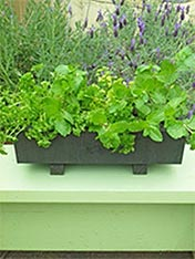 Stain a wooden planter box