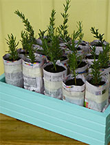 Make a growing box with newspaper pots