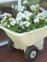 Turn an old plastic wheelbarrow into a stylish summer planter