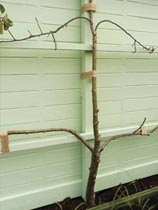 How to make an espalier support frame