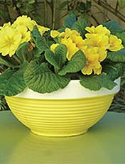 how to transform a terracotta pot into a bright and cheerful planter for some potted winter