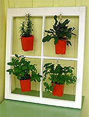 Make a plant display from a window frame