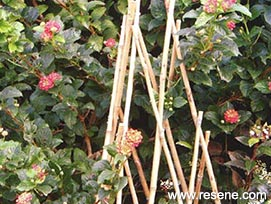 Built with bamboo - Bamboo poles are a great gardener's aid | a NZ