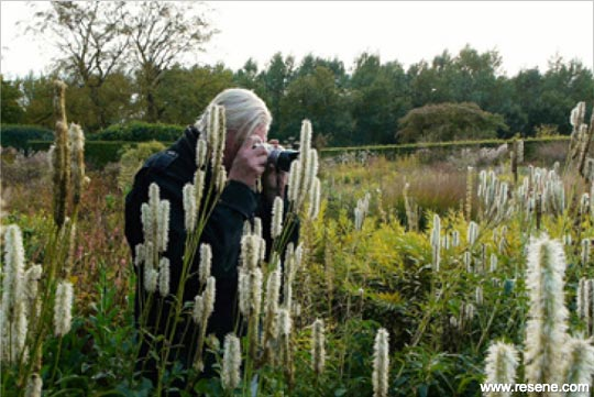 Film: Five Seasons:  The Gardens of Piet Oudolf