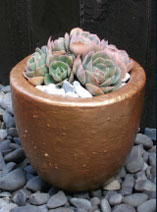 Paint a pot for your succulents