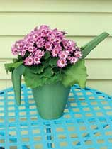 Make a watering jug into a plastic planter